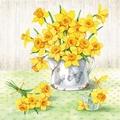 Narzisse - Tulpe - Hyazinthe - Krokus - Glockenblume