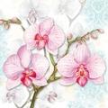 Hortensie - Flieder - Orchidee - Fuchsie - Strelizie