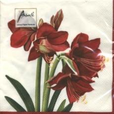 Amaryllis - Red dream