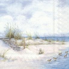 5 Möwen am Strand