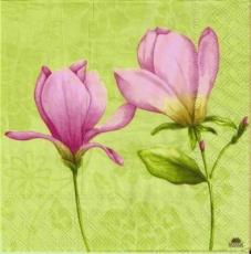 Hübsche Magnolien rosé - Pretty pink magnolia - Magnolia assez roses
