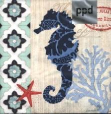 Seepferdchen - Sea horse - Puerto Rico klein