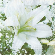 White flowers left