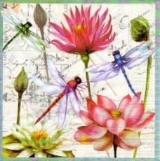 Libellen an Lilien - Dragonflies on lilies - Libellules sur lys