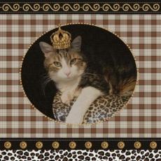 Königskatze - Kind Cat - Chat de roi