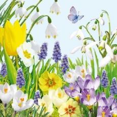 Blumenwiese & Schmetterling - Flower Meadow & Butterfly - Pré de fleur & papillon