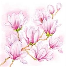 Hübsche Magnolie - Nice Magnolia - Jolie Magnolia