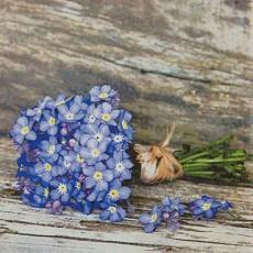 Kleines Sträußchen Vergissmeinnicht auf Holz - Small posy of forget-me-not on wood - Petit bouquet de myosotis pas sur le bois