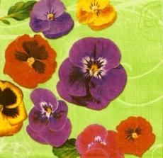 Bunte Stiefmütterchen - Colorful pansies - Pensées colorées