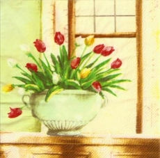 Bunte Tulpen im Topf vor Fenster - Colorful tulips in pot in front of window - Tulipes colorées dans le pot en face de la fenêtre