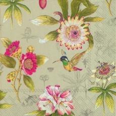 Kolibris auf Blütensuche - Himmingbirds on flower search - Colibris + recherche de fleurs