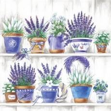 Blumentöpfe mit Lavendel, Margeriten..... - Flower pots with lavender, daisies..... - Pots de fleurs de lavande, des marguerites