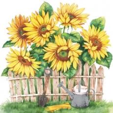 Sonnenblumen im eigenen Garten - Sunflowers in your garden - Tournesols dans votre jardin