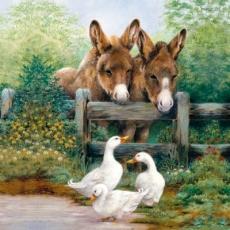 Treffen von Eseln & Gänsen, Esel & Gans  - Meeting of donkeys and geese, goose - Réunion des ânes et oies