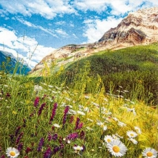 Unterwegs in wunderschöner Berglandschaft - On the way in wonderful mountain landscape - En chemin dans le paysage de montagne merveilleux