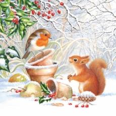 Rotkehlchen & Eichhörnchen im Schnee - Robin & Squirrel in the snow - Rouge-Gorge & Écureuil dans la neige