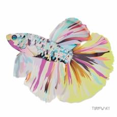 Wundervoller, farbenprächtiger Fisch - Colorful Fish - Poisson coloré
