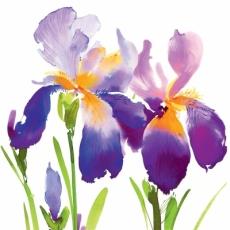 Blaue, lila Iris - Purple Iris - Iris pourpre