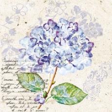 Hortensie & Geschriebenes, lila - Hydrangea & Writting, purple - Hortensias et écriture, violet