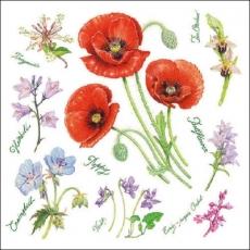 Mohnblumen und viele verschieden andere Blumen - Poppies and many different other flowers - Coquelicots et autres fleurs nombreuses
