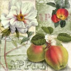Äpfel & Magnolienblüte - Apples & magnolia blossoms - Les pommes et les magnolias