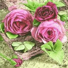 Wunderschöne Rosen - Pretty Roses - Roses jolies