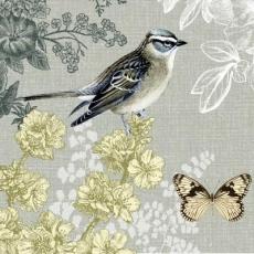 Vogel & Schmetterling - Bird and Butterfly - Oiseau et papillon