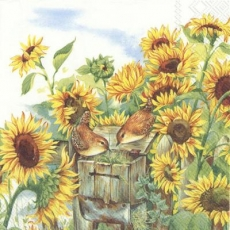 Sonnenblumen & 2 Vögel - sunflowers & 2 Birds - Tournesols et 2 oiseaux
