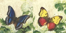 2 wunderschöne Schmetterling - 2 beautiful Butterflies - 2 beaux papillons