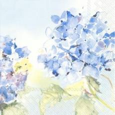 3 wunderschöne Hortensien - 3 beautiful hydrangeas - 3 magnifiques hortensias