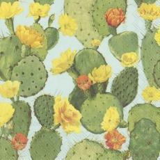 Blühende Kakteen - Blooming cactuses - Cactus en fleurs