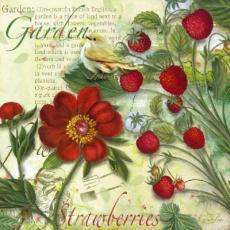 Kleiner Vogel im Erdbeergarten - Little bird in the strawberry garden - Petit oiseau dans le jardin de fraises