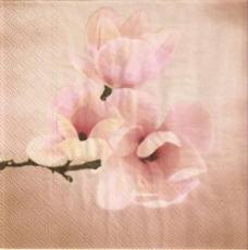 Wunderschöne Magnolienblüten - Beautiful magnolia blossoms - Belles fleurs de magnolia
