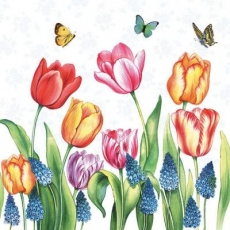 Schmetterlinge besuchen Tulpen und Traubenhyazinthen - Butterflies visit tulips and grape hyacinths - Les papillons visitent les tulipes et les jacinthes de raisin