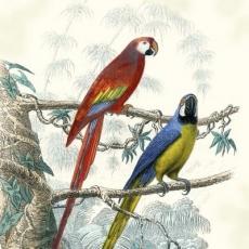 Papageien, Aras rot & blau - Parrots, macaws red & blue - Perroquets, aras rouges et bleus