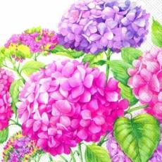 hübsche Hortensien - pretty hydrangeas - jolis hortensias