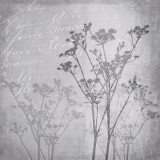 Blütenharmonie in Grau - Flower harmony in gray - Harmonie de fleurs en gris