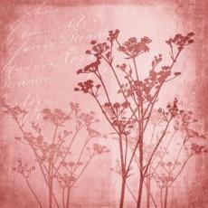Blütenharmonie in Rot - Flower harmony in red - Harmonie de fleurs en rouge