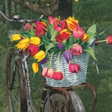 Tulpen im Korb auf einen Fahrrad - Tulips in the basket on a bicycle - Tulipes dans le panier sur un vélo