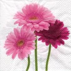 3 Gerbera in rose und rot - 3 gerberas in rose and red - 3 gerberas en rose et rouge