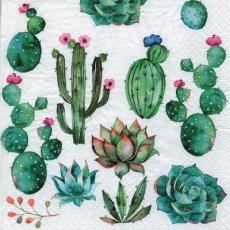 verschiedene Kakteen - different cactuses - différents cactus