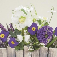 schöne Frühlingsblumen, Hyaziente, Schneeglöckchen & Glockenblume - beautiful spring flowers, hyaciente, snowdrop & bellflower - belles fleurs printanières, hyaciente, perce-neige et campanule