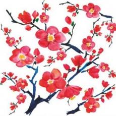 schöne Apfelblüten - beautiful apple blossoms - belles fleurs de pomme