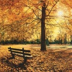 Goldener Herbst - Golden autumn - Automne doré