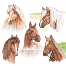 5 Pferde - 5 horses - 5 chevaux