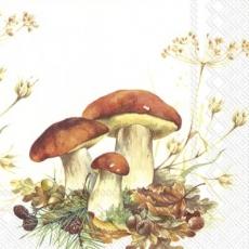 3 wunderschöne Steinpilze - 3 beautiful porcini mushrooms - 3 beaux champignons porcini