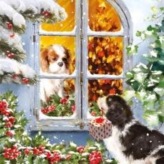 Hund bringt Geschenk für seine Liebste - Dog brings gift for his sweetheart - Chien apporte un cadeau pour sa petite amie