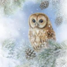 Eule sitzt in der Tanne - Owl sits in the fir - Chouette se trouve dans le sapin
