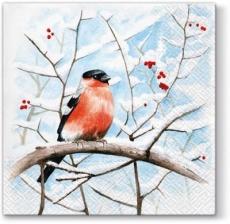 Gimpel, Vogel sitzt auf verschneiten Ast - Bullfinch, bird sitting on snowy branch - Bouvreuil, oiseau assis sur une branche enneigée