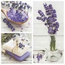 Lavendel in verschiedenen Formen - Lavender in different forms - Lavande sous différentes formes
